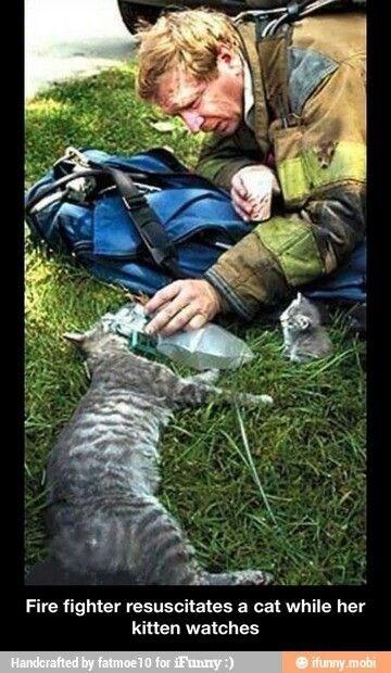 firefighter resuscitates a cat