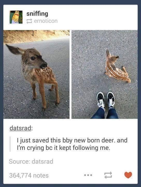 Organism - A sniffing ernoticon datsrad: I just saved this bby new born deer. and I'm crying bc it kept following me. Source: datsrad 364,774 notes