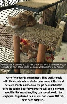cats allowed in an office for employees to hopefully adopt them