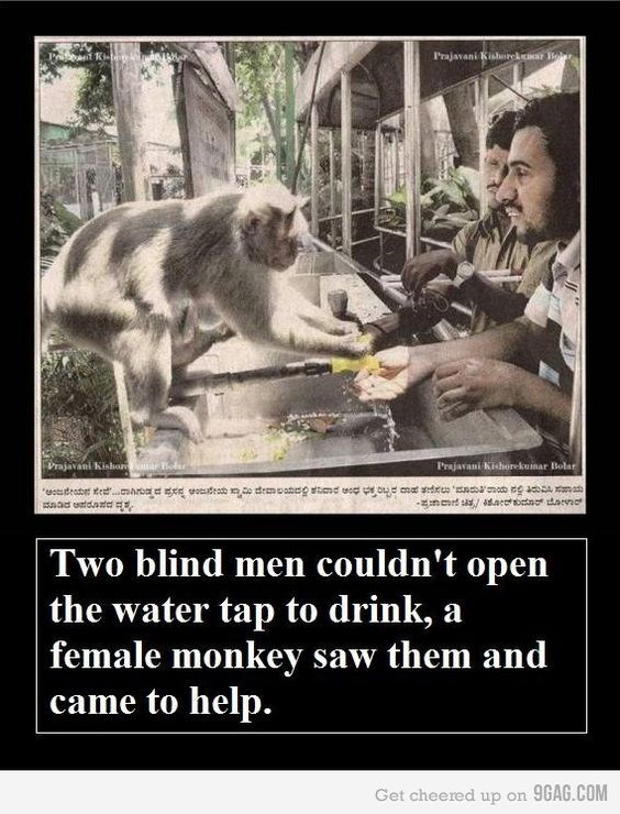 monkey helps blind men with opening a faucet
