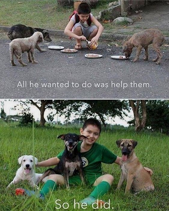 little boy feeds stray dogs