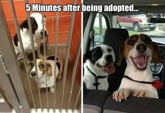 dogs smiling after being adopted