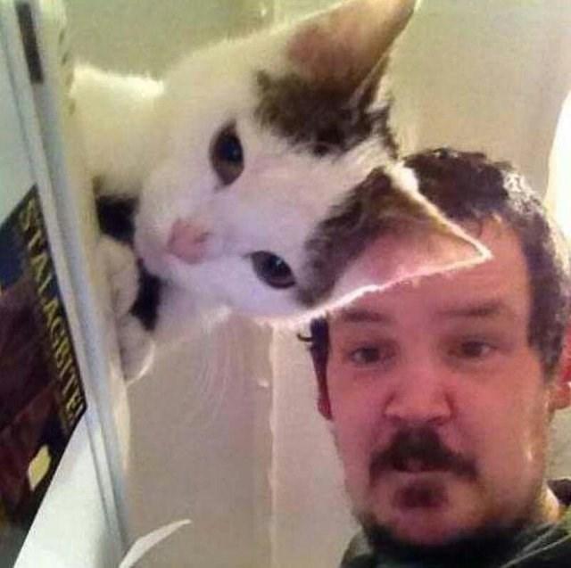 Cat - STALAGBITER
