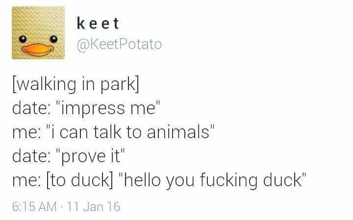 Tweet about cursing out animals as a way of talking to them