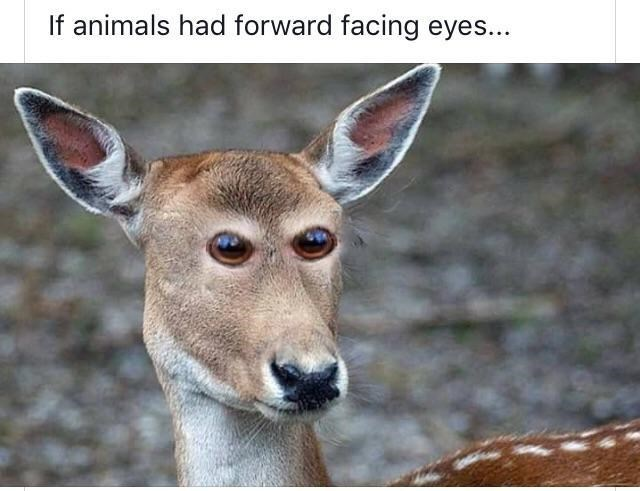 deer with eyes that are photo-shopped to front facing eyes instead of at the side of the head