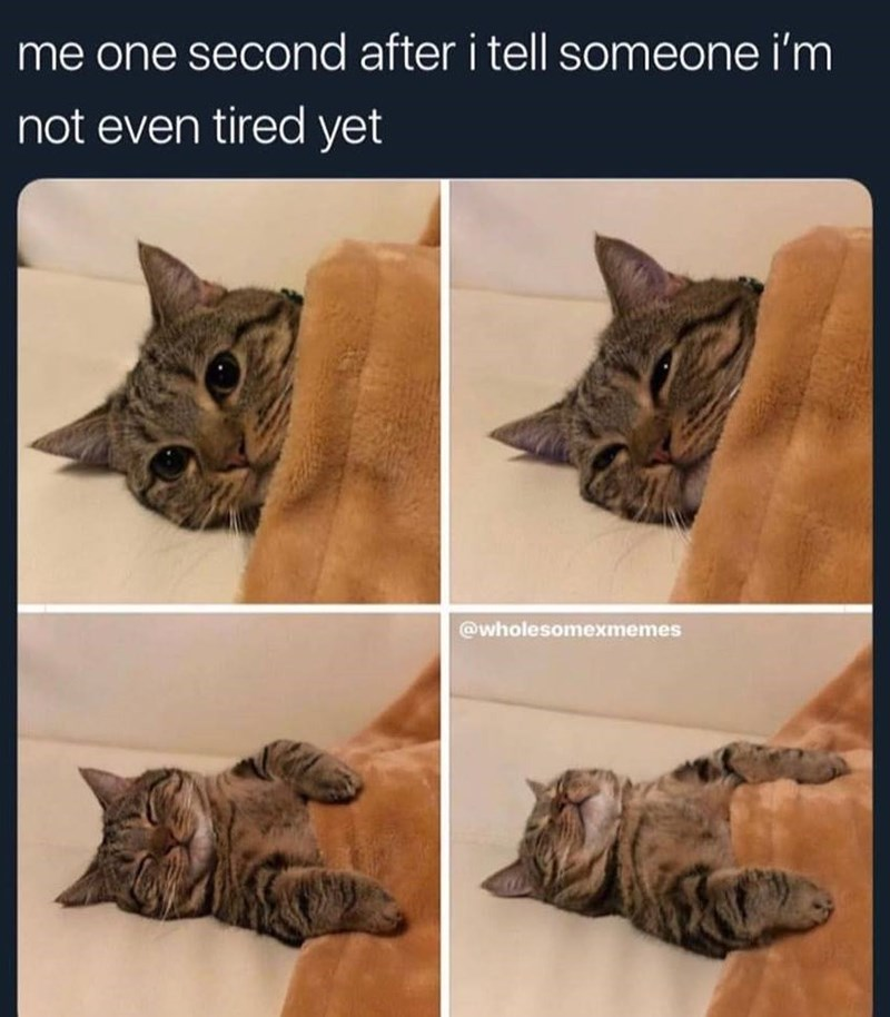 """Caption that reads, """"Me one second after I tell someone I'm not even tired yet"""" above pics of a cat progressively falling asleep under a blanket"""