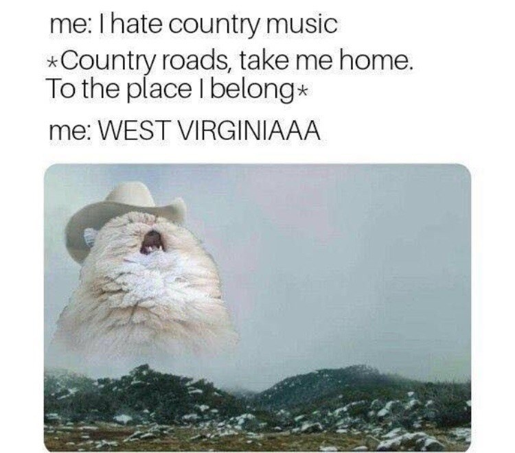 """meme of a cat singing """"country roads, take me home"""""""