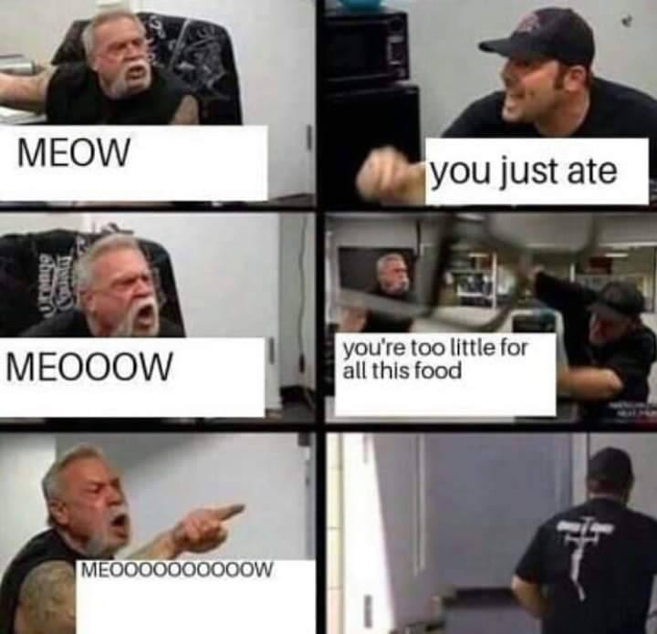 grown man screaming meow when he wants more food