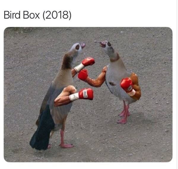 meme about the movie bird box but with pictures of birds boxing