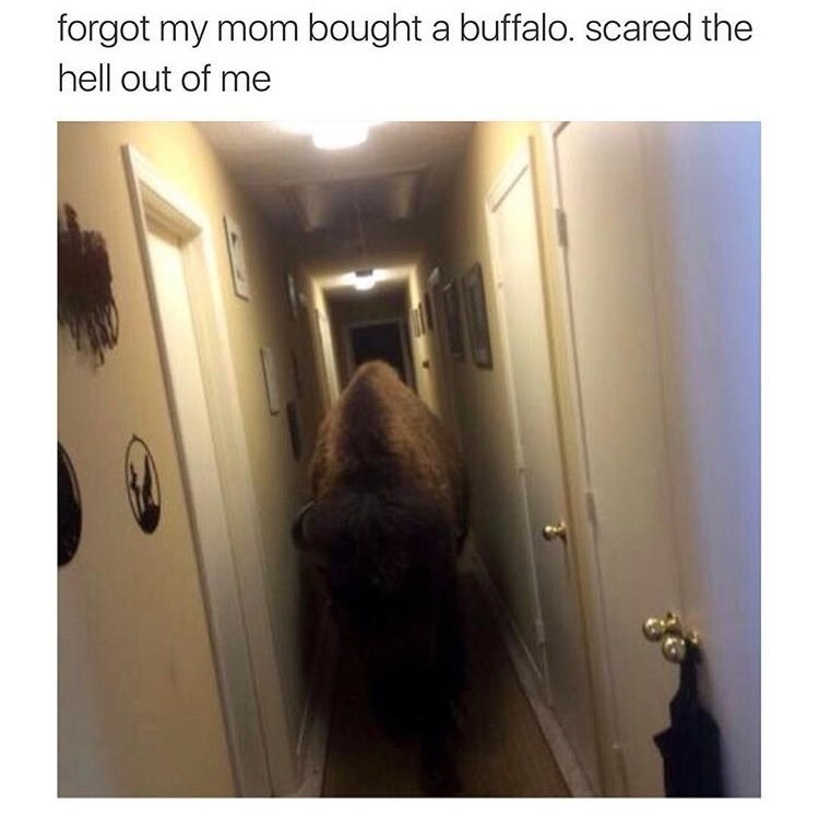 pic of a buffalo that is roaming a home