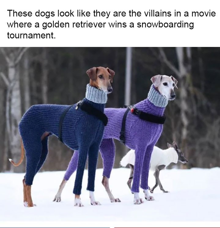 Dog - These dogs look like they are the villains in a movie where a golden retriever wins a snowboarding tournament