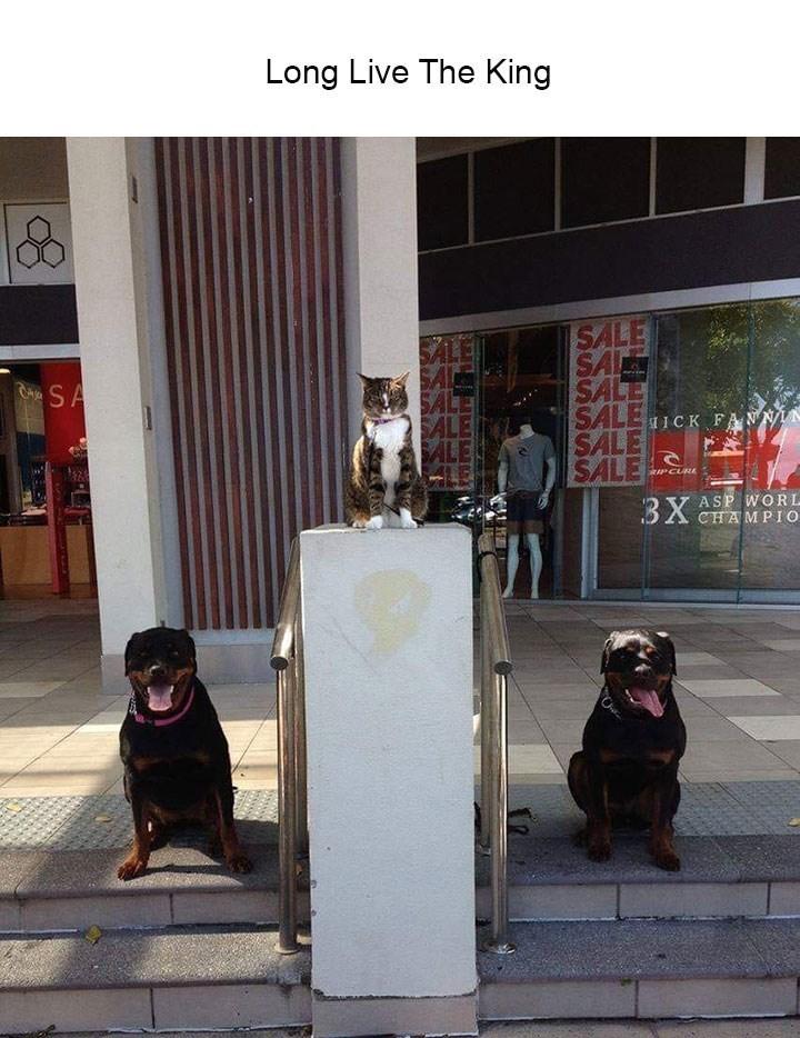 Dog - Long Live The King SALE SA SALE SALE1CK FANN SALE SALE SALE SALE AeSA RIPCUB ASP WORL CHAMPIO 3X