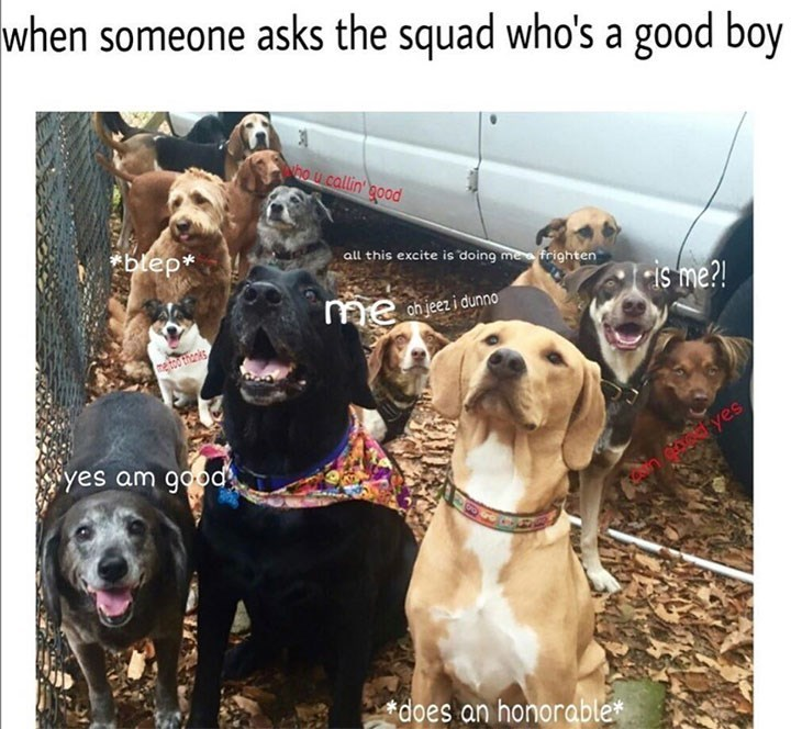 Dog - when someone asks the squad who's a good boy Who callin' good blep* all this excite is doing me frighten is me?! on jeet i dunno me me to thanks syes am good yes does an honorable