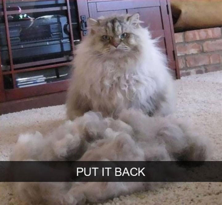 Cat - PUT IT BACK