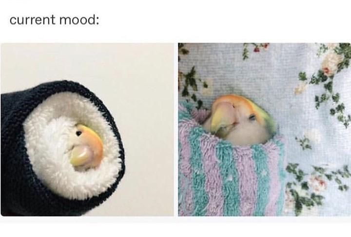 Organism - current mood: