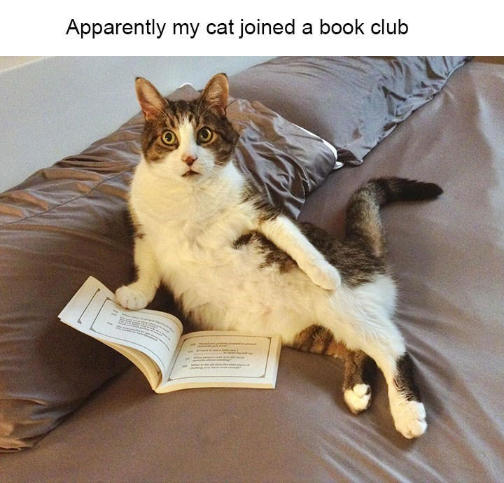 Cat - Apparently my cat joined a book club m he a