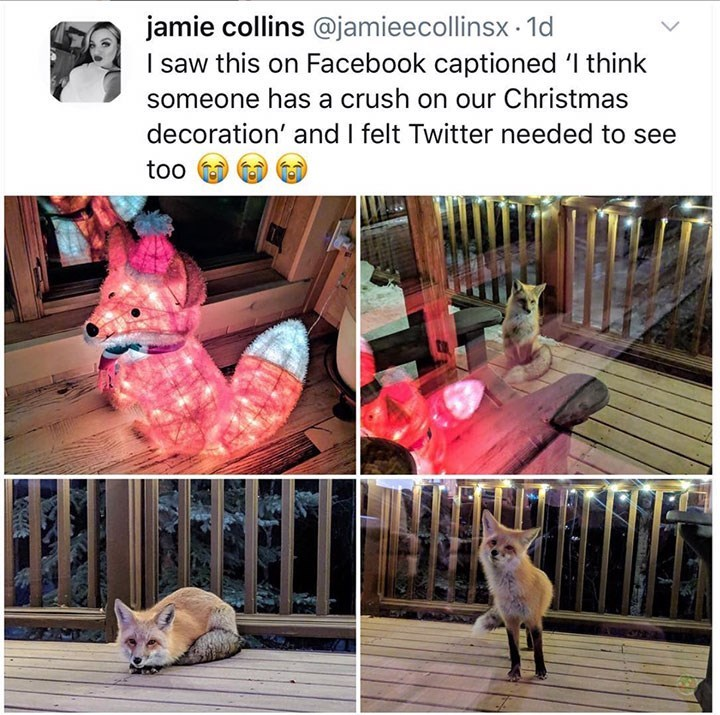 Pink - jamie collins @jamieecollinsx 1d I saw this on Facebook captioned I think someone has a crush on our Christmas decoration' and I felt Twitter needed to see too