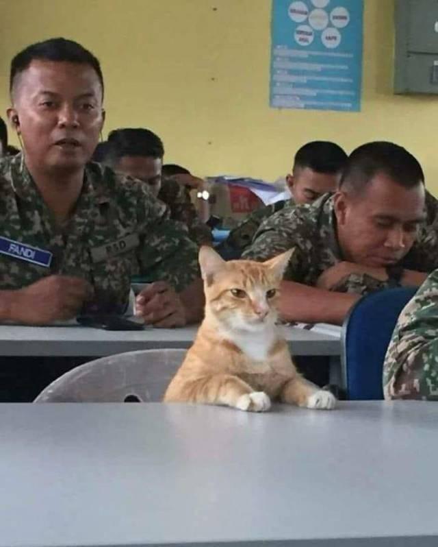 Cat - FANDI