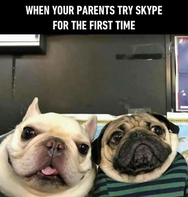 dog meme staring into the camera and comparing it to your parents skyping you for the first time