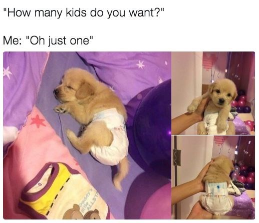 """Puppy - """"How many kids do you want?"""" Me: """"Oh just one"""" eday"""