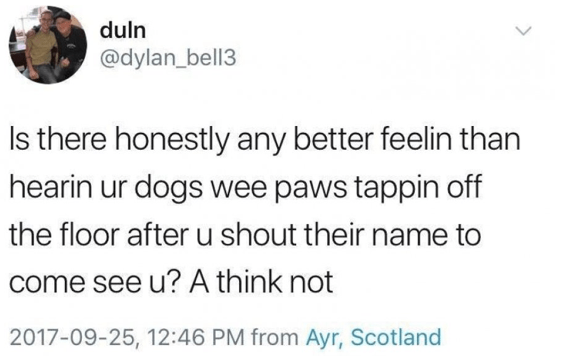 wholesome meme - Text - duln @dylan_bell3 Is there honestly any better feelin than hearin ur dogs wee paws tappin off the floor after u shout their name to come see u? A think not 2017-09-25, 12:46 PM from Ayr, Scotland