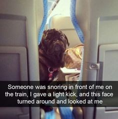 wholesome meme - Birth - Someone was snoring in front of me on the train, I gave a light kick, and this face turned around and looked at me