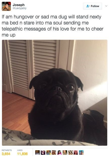 wholesome meme - Dog - Joseph GLavlyjably Follow If am hungover or sad ma dug will stand nexty ma bed n stare into ma soul sending me telepathic messages of his love for me to cheer me up RETWEETS LIKES 11,836 3,654