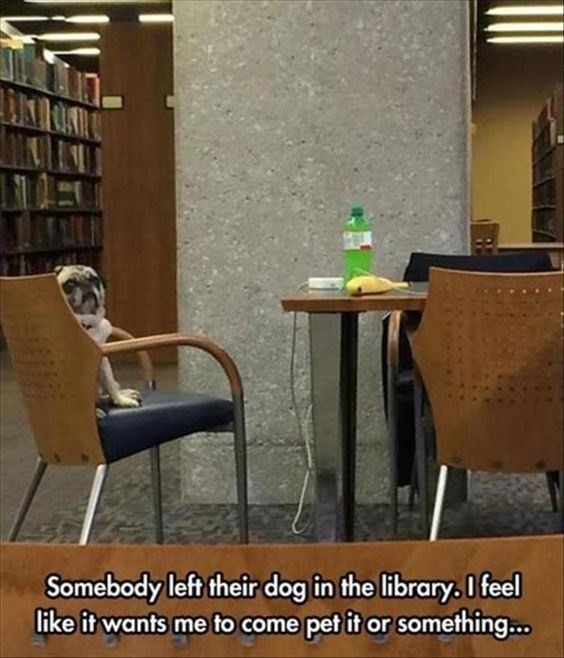 wholesome meme - Furniture - Somebody left their dog in the library. I feel like it wants me to come pet it or something...