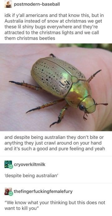 wholesome meme - Insect - postmodern-baseball idk if y'all americans and that know this, but in Australia instead of snow at christmas we get these lil shiny bugs everywhere