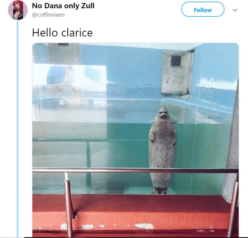 No Dana only Zull Follow @coffinvixen Hello clarice