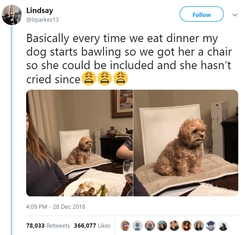 Dog - Lindsay Follow @Irparkes13 Basically every time we eat dinner my dog starts bawling so we got her a chair so she could be included and she hasn't cried since 2 4:09 PM - 28 Dec 2018 78,033 Retweets 366,077 Likes