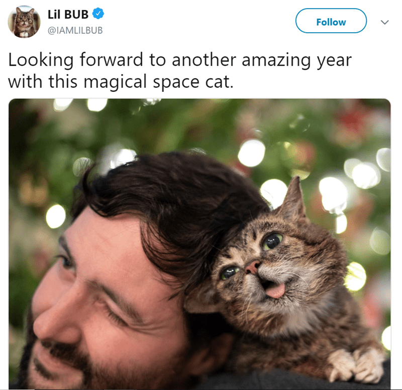 Cat - Lil BUB Follow @IAMLILBUB Looking forward to another amazing year with this magical space cat.