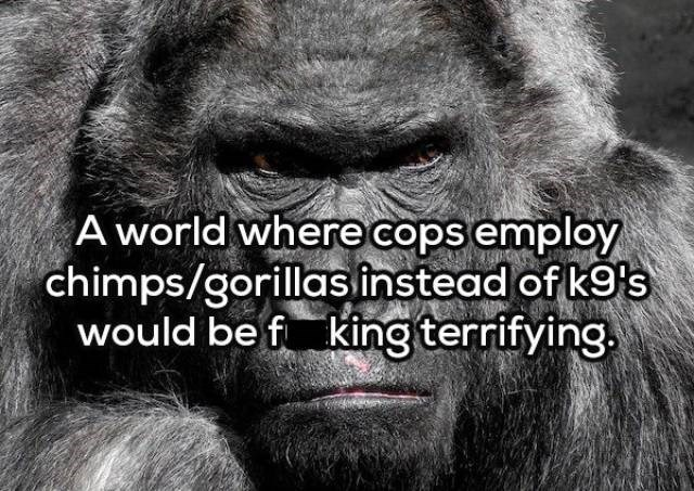 Western lowland gorilla - A world where cops employ chimps/gorillas instead of k9's would be f king terrifying.