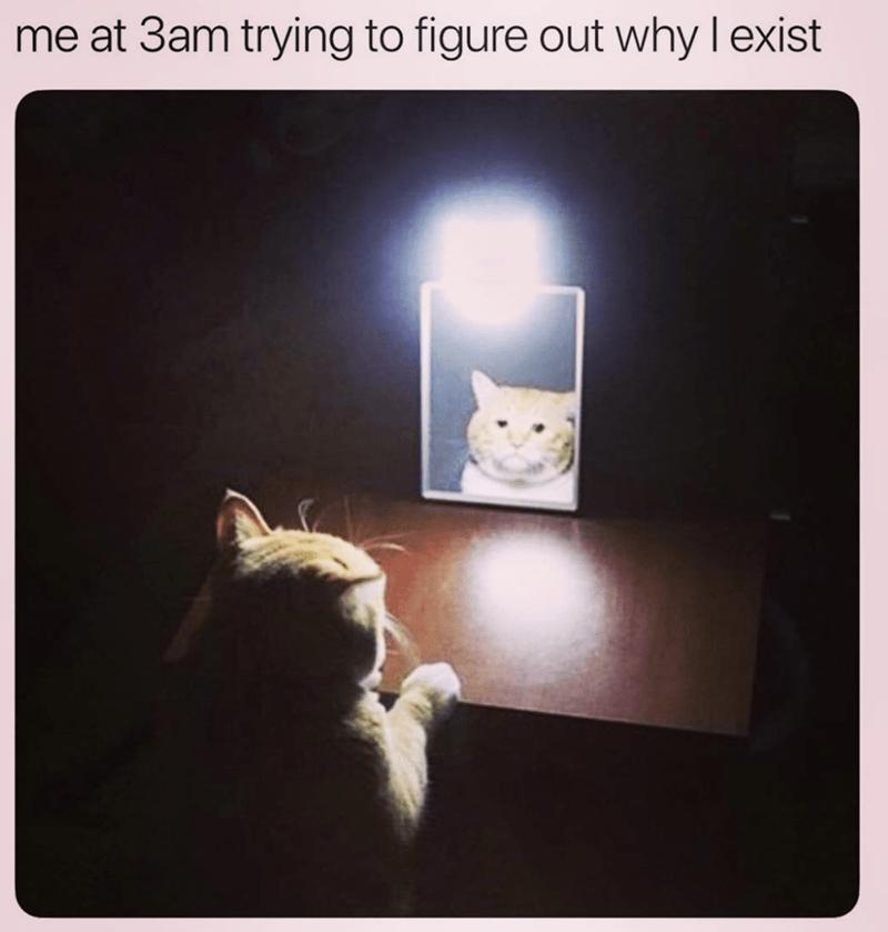 funny cat memes cat memes - 9256475648