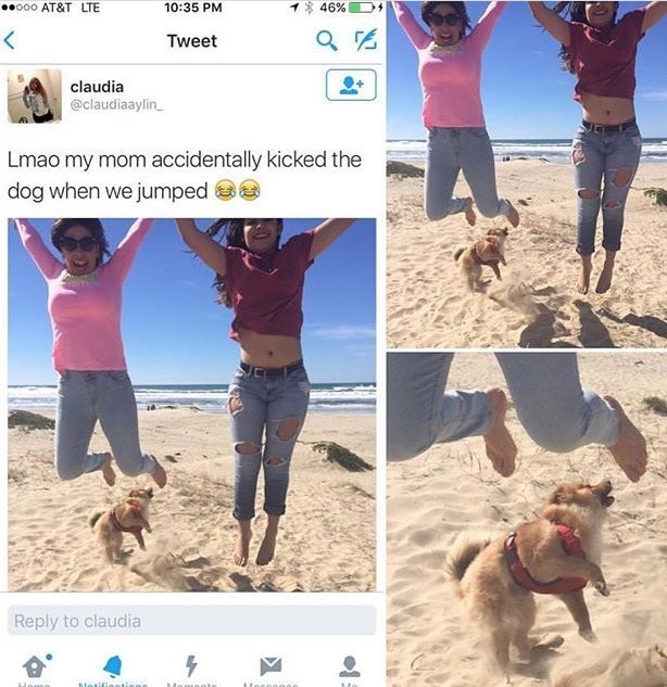 mom kicked their dog as she was jumping