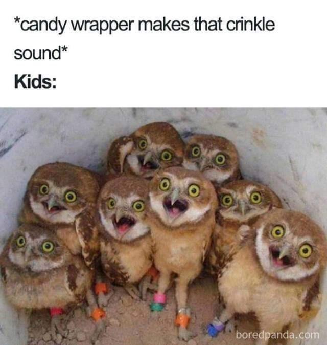 meme about your kids hearing you open a snack with pic of group of owls with their beaks open excitedly