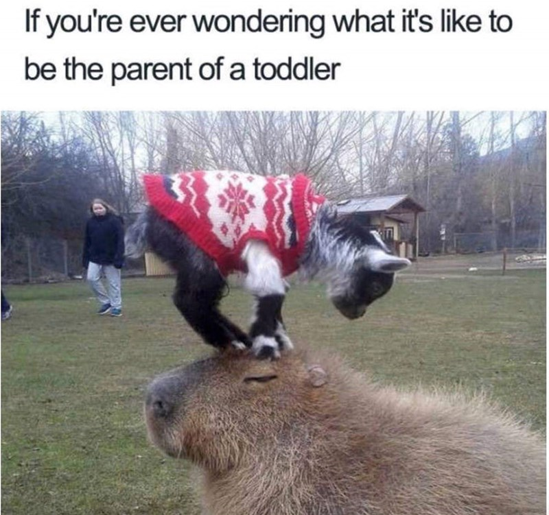 meme about what it's like to be a parent with pic of baby goat standing on the head of a gopher