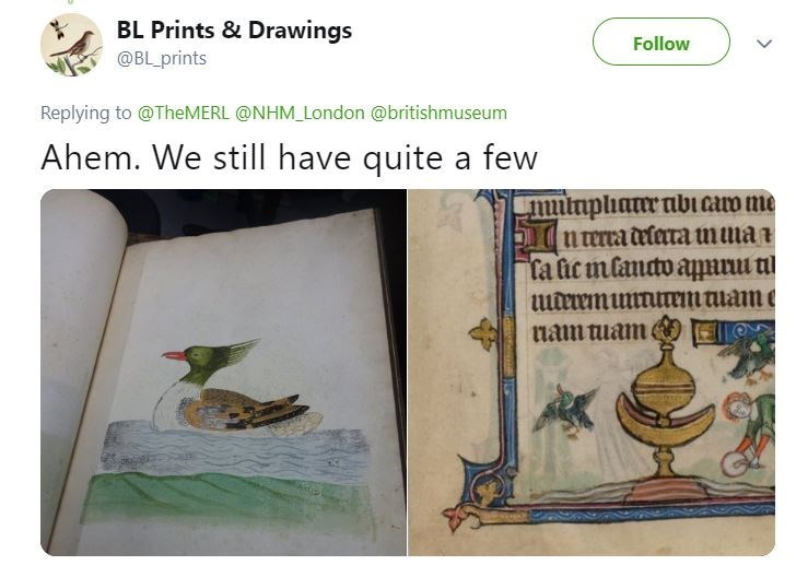 Tweet with pics of classic paintings showing ducks