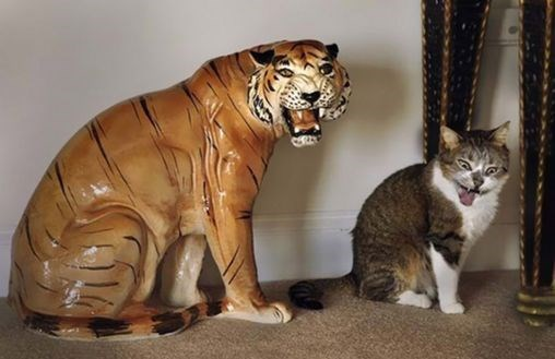 Pic of a cat sitting next to a statue of a tiger and making a similar face