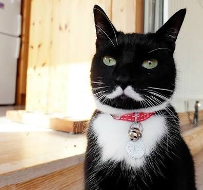 Pic of a black and white cat appearing to have a white mustache