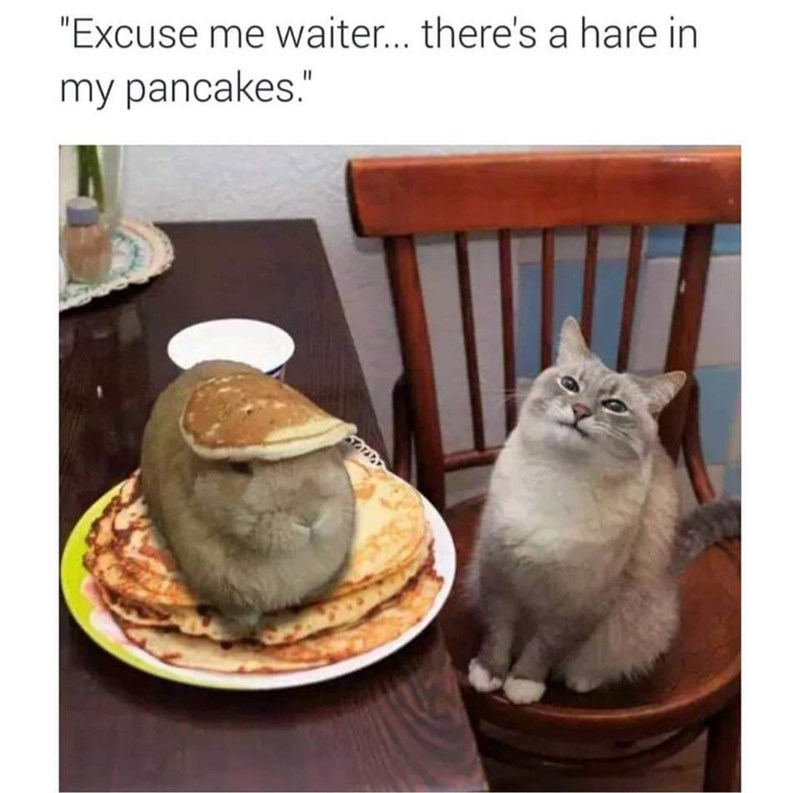 """Caption that reads, """"Excuse me waiter...there's a hare in my pancakes"""" above a pic of a cat sitting next to a plate with pancakes and a rabbit"""
