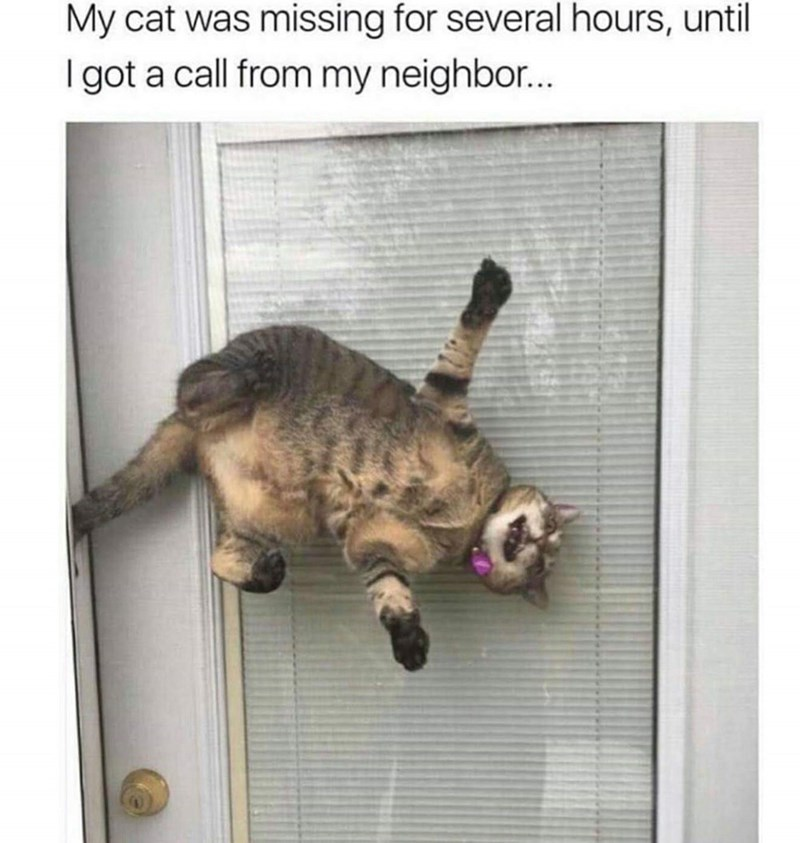 Pic of cat who was thought to be missing but was actually stuck in a glass door