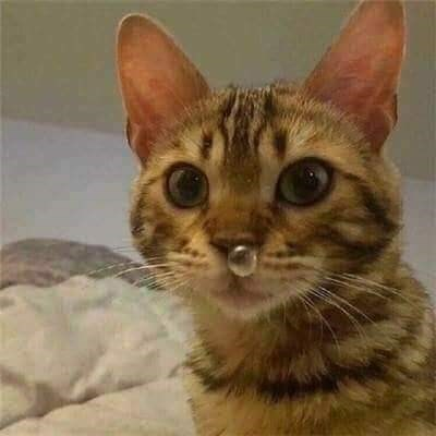 Funny pic of a cat with a snot bubble coming out of its mouth