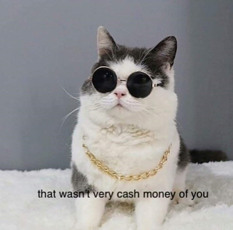 Pic of a cat wearing round sunglasses and a gold chain