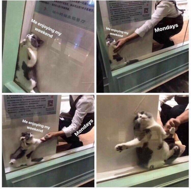 Meme about hating Mondays with pics of cats hiding in a glass window