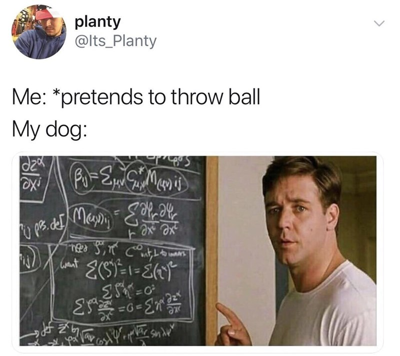 Meme about confusing dogs by fake throwing balls