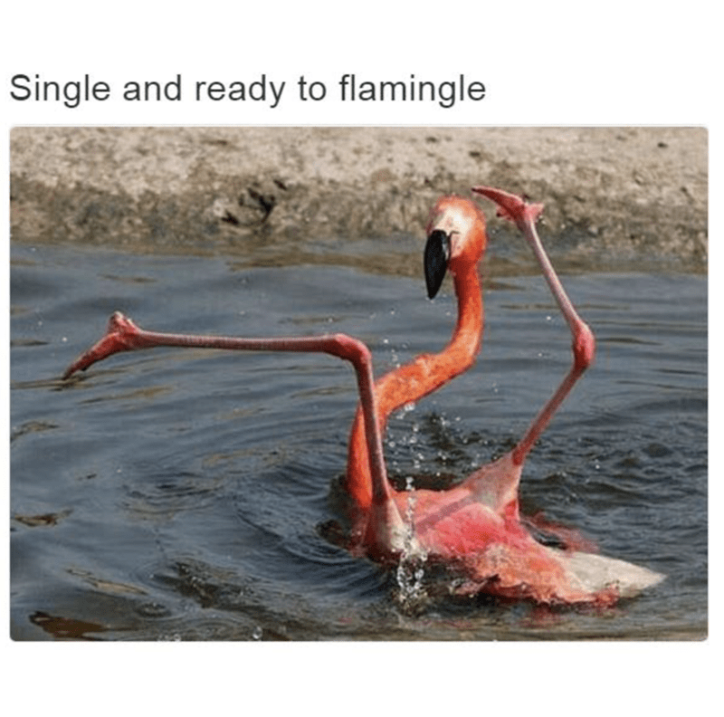 Meme about being single with pic of flamingo with its legs in the air