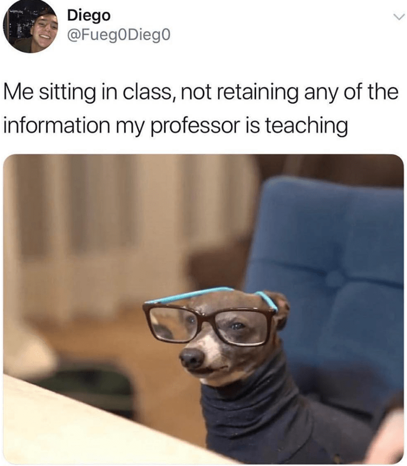 Dog - Diego @FuegODieg0 Me sitting in class, not retaining any of the information my professor is teaching