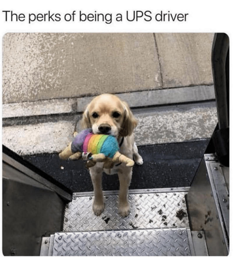 Dog - The perks of being a UPS driver