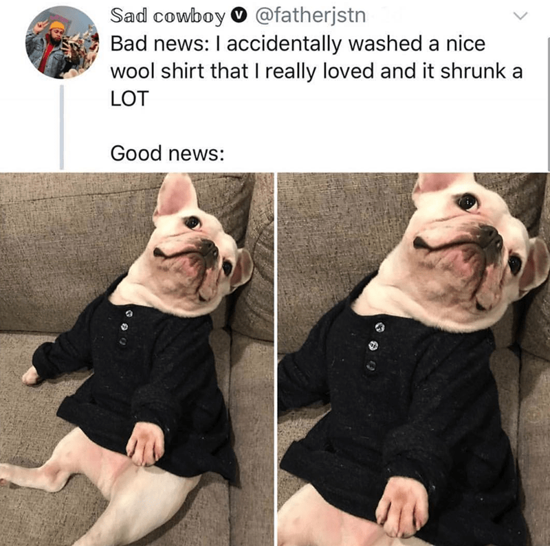 French bulldog - Sad cowboy @fatherjstn Bad news: I accidentally washed a nice wool shirt that I really loved and it shrunk a LOT Good news: